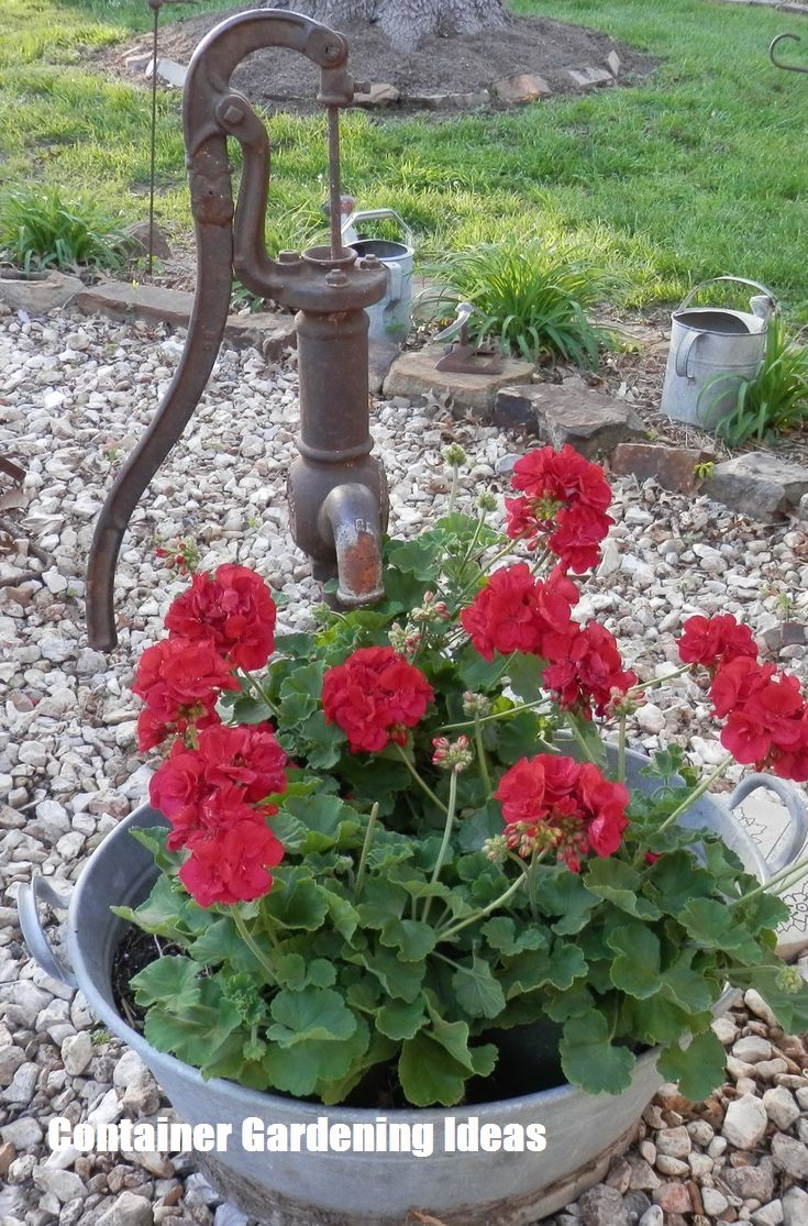 Container Gardening Ideas For Your Home Red Geraniums Container Gardening Geraniums