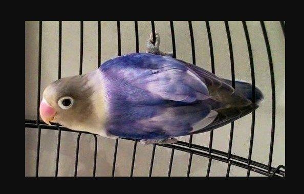 Pin Di Rajskie Pticy