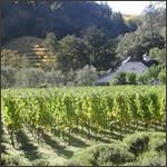 Spring Mountain Vineyard - want to try their Sauvignon Blanc and check them out in Napa.