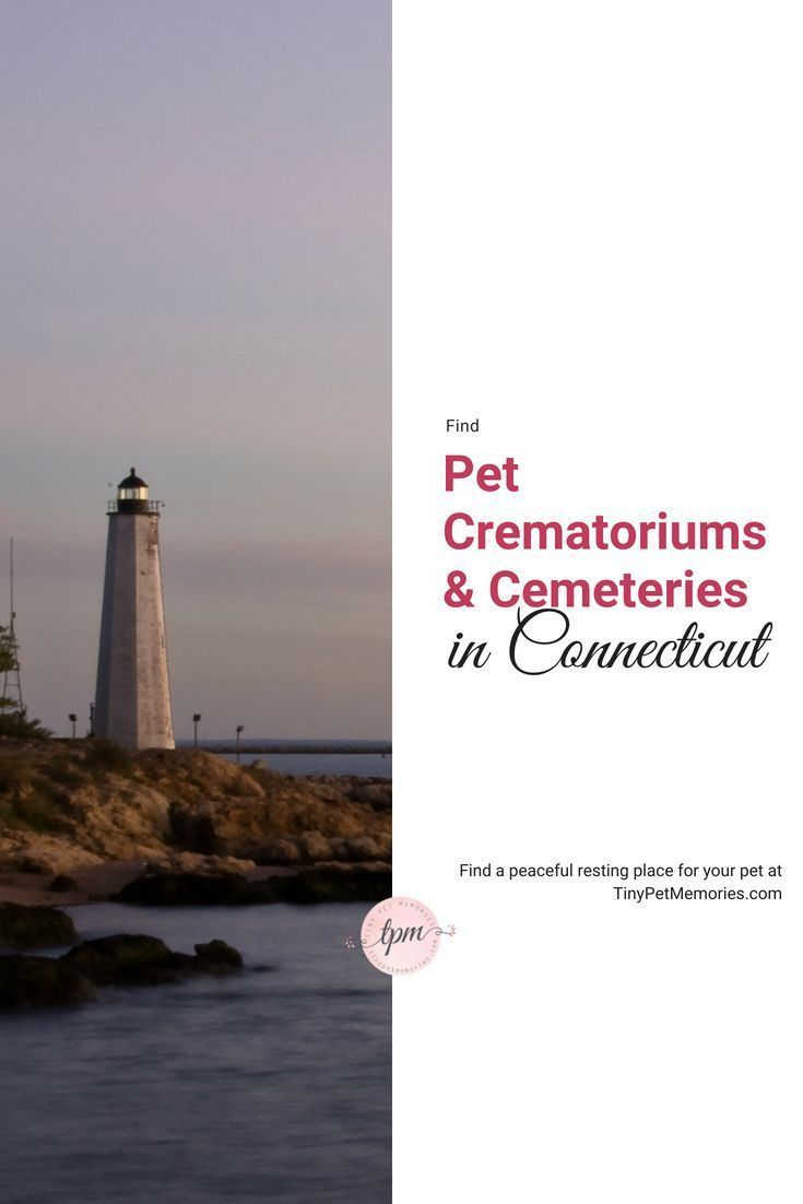 Your Pet Was Part Of Your Family Give Him Or Her A Special Place Of Eternal Rest By Finding A Petcemetery Or Petcremat Cemeteries Pet Cemetery Pet Memorials