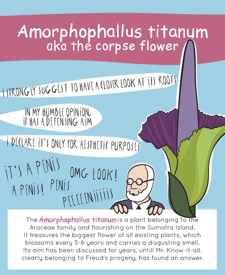 EEEW #004: AMORPHOPHALLUS TITANUM (aka the Corpse Flower)