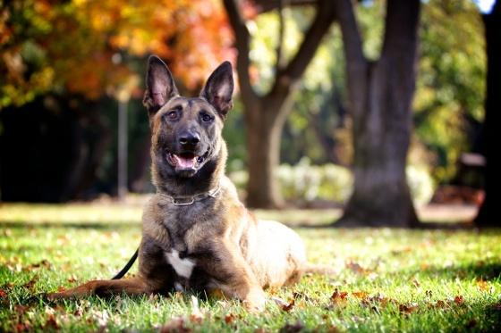 Miski dla psów:  http://www.kakadu.pl/Inne-akcesoria-dla-psow/miski-dla-psow.html