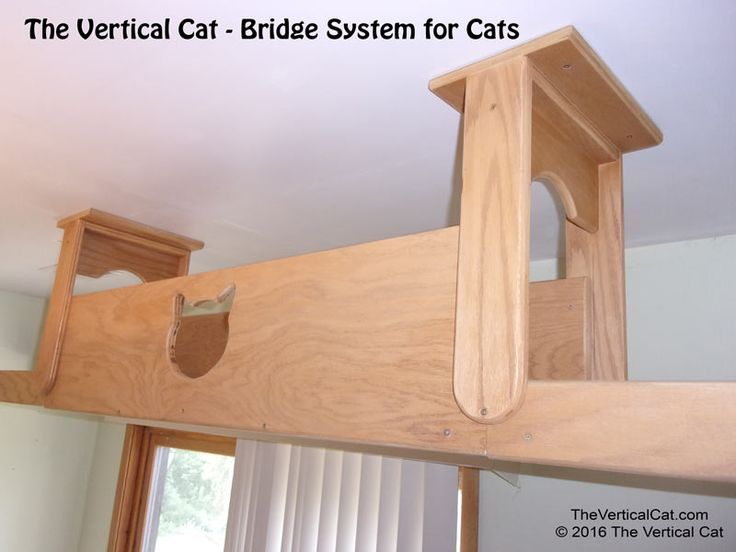 Cat Bridge with Tunnel | The Vertical Cat - Contemporary Cat Furniture, Trees…