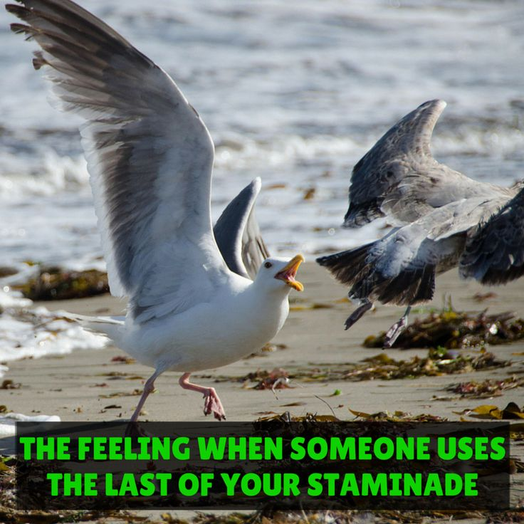 The feeling when someone uses the last of your Staminade 😂 It's worth having a spare on hand, just in case!