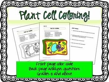 Plant Cell Coloring Sheet