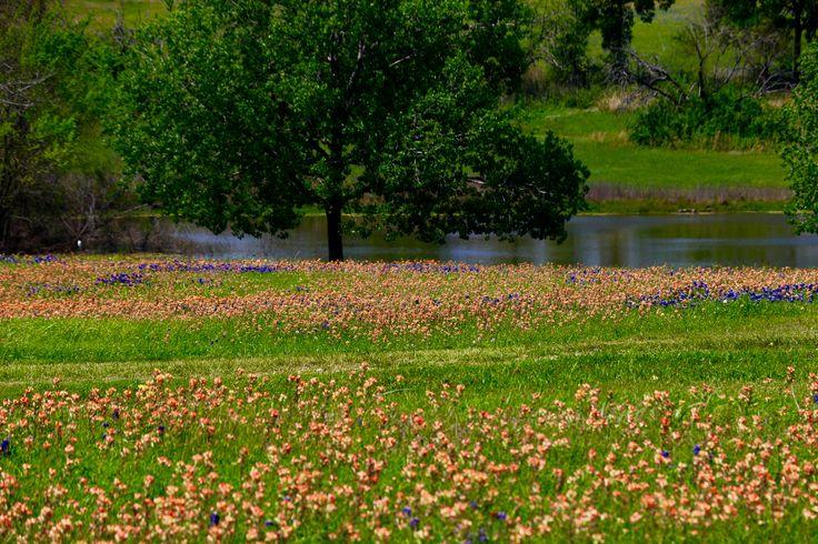 Spring near Navasota, TX