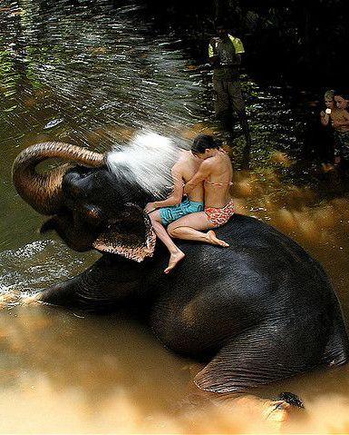 Baby Elephant Fun - During bathing at the Sahakari Spice Farm   by Jon Hurd   photo edit.