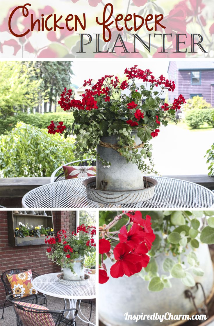 An old chicken feeder becomes a outdoor beautiful planter