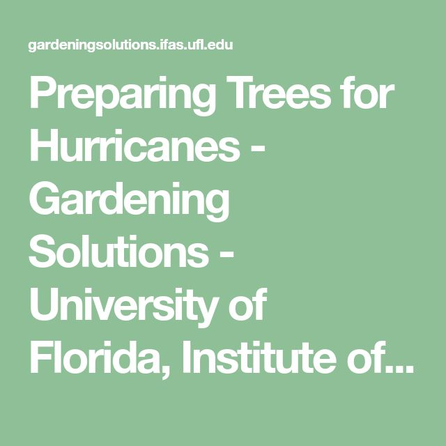 Preparing Trees for Hurricanes - Gardening Solutions - University of Florida, Institute of Food and Agricultural Sciences