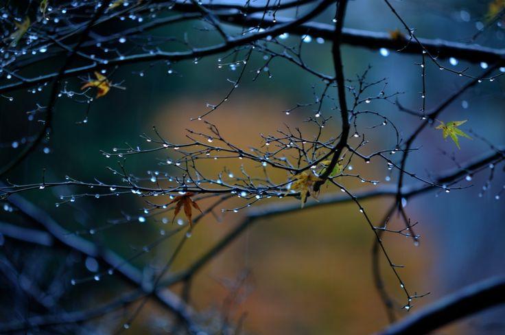 """outdoormagic: """"Rain by Kazumi Ishikawa """""""