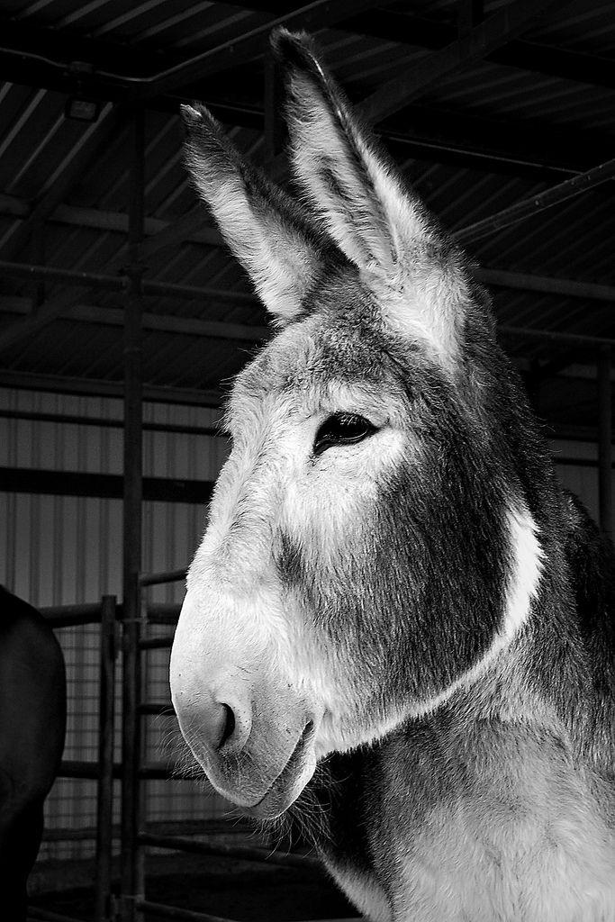 Miss Lucy #donkey