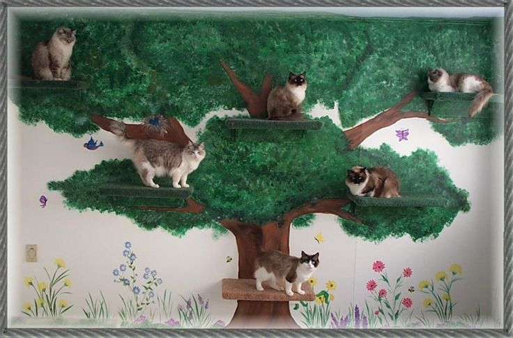 Awesome! Great idea for cat play room
