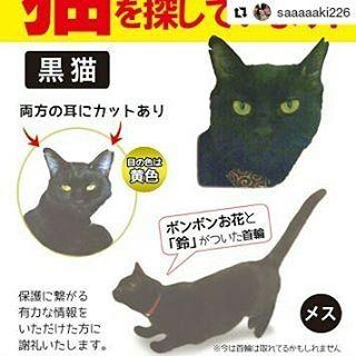 🚨埼玉県朝霧市宮戸付近、迷子の黒い猫ちゃんです。情報求めます🙏  #Repost @saaaaaki226 with @repostapp ・・・ 1月25日の夜から、飼い猫が行方不明になりました。埼玉県朝霞市宮戸付近です。宮戸付近だけでなく、広範囲で探しています。本気で探してます。ご協力お願いします。  黒猫、瞳の色は黄色で、両方の耳にカットがあります。ピンクのボンボンお花の首輪をつけていますが、今は外れているかもしれません。見かけた方はご連絡ください。虐待されていた過去があるので、男のひとを怖がる傾向があります。隠れるのがとても上手く、狭いところが大好きです。ご協力お願いします。 シェアしてください。朝霞市に住んでいる人たちに届きますように  #埼玉県 #朝霞市 #宮戸 #猫 #愛猫 #黒猫 #保護猫 #虐待 #迷い猫 #行方不明 #探してます #情報ください