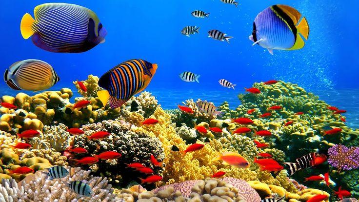 Image result for underwater scenes