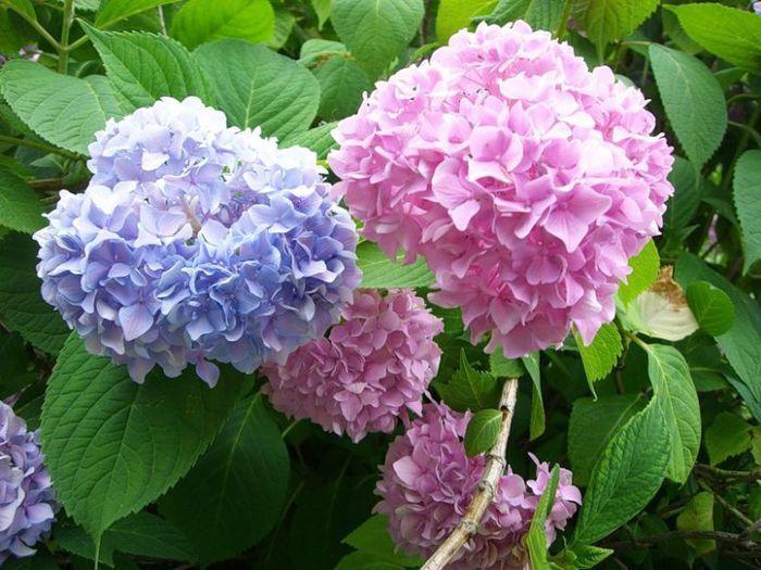 Цветущие кустарники – центральное украшение любого сада. С их помощью можно создать удивительную композицию и сделать нужный акцент в ландшафтном дизайне.