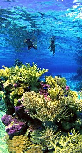French Polynesia snorkeling with my love in exotic places <3 :)