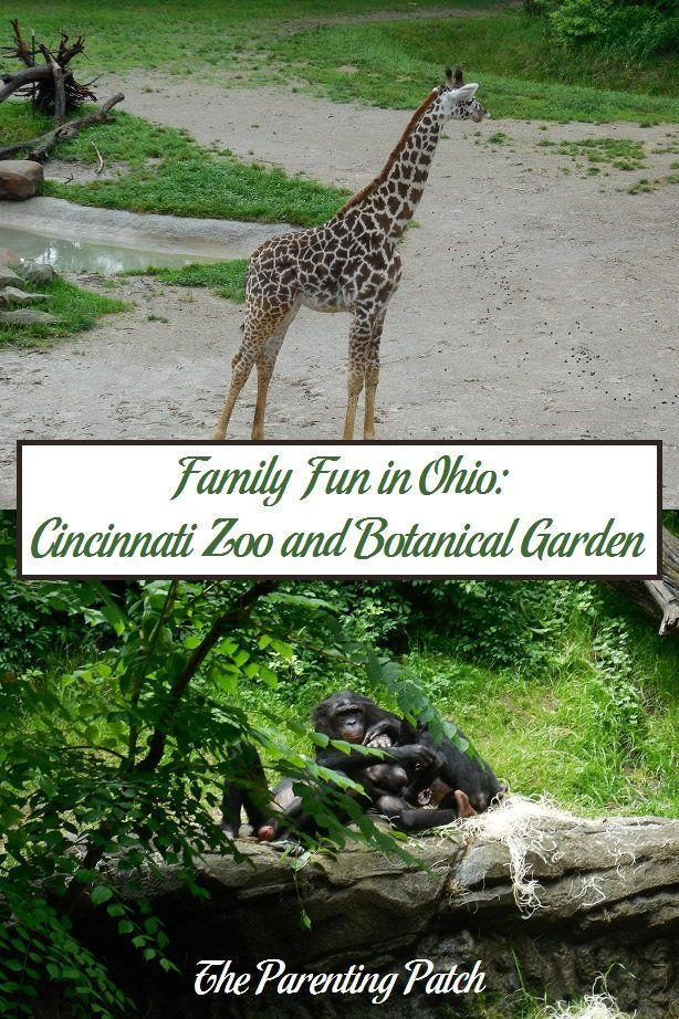 If you are ever in the Cincinnati area of Ohio with a day to spend exploring, I highly recommend visiting the Cincinnati Zoo and Botanical Garden. General admission is reasonable for just a prominent zoo. With animals including giraffes, hippos, bonobos,