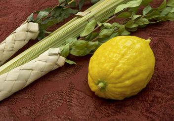 Lulav and Etrog: The Four Species