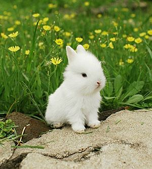 Baby So Cute Animals Are Just Too Bunny