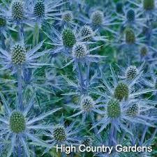 Image result for flower greenery spiky