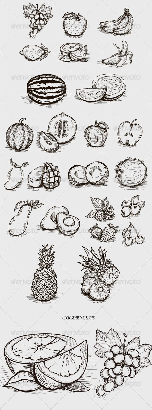 Sketched-Style Fruit Illustrations - Food Objects                                                                                                                                                                                 More