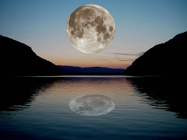 Whitetail Deer in the Moonlight   Flickr - Photo Sharing!   Full Moon Reflecting Off Water