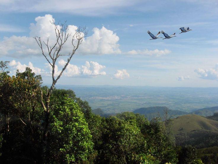 #aves #birds #brasil #campos do jordao #cu #clouds #nature #serra #sky
