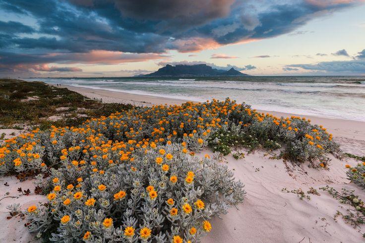 Фотография Spring Mountain автор Vivek Bishun на 500px