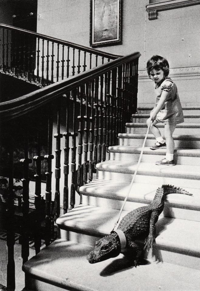 child walking the gator.