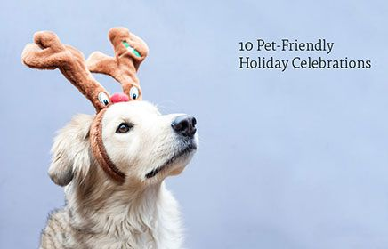 Are you looking for cat and dog-friendly activities for this holiday season? Take a peek at our top ten pet-friendly holiday activities to get everyone you love in the holiday spirit!