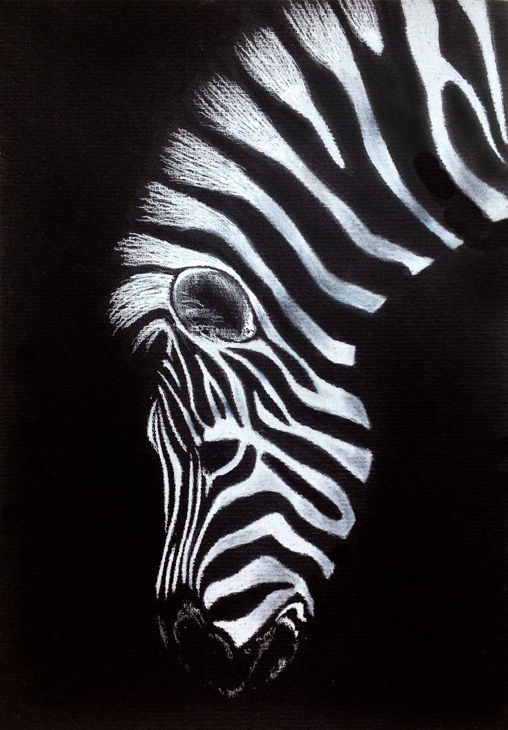 Zebra – drawing on black paper