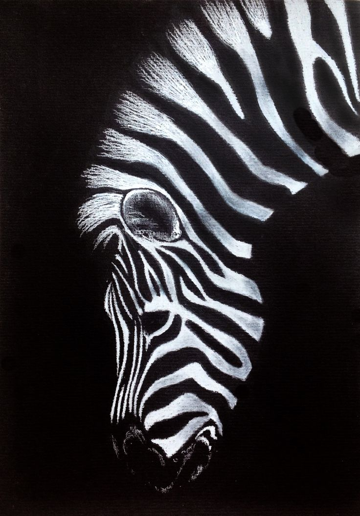 Zebra – drawing on black paper
