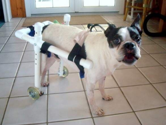 25 Best Ideas about Dog Wheelchair on Pinterest