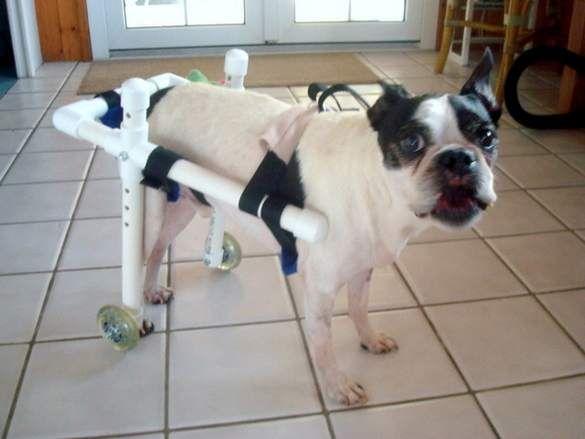 how to make a homemade knee brace for my dog