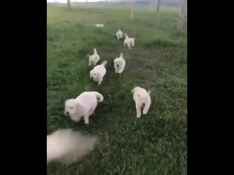Doc family lovely https://youtu.be/ZEDPaiNDOiE