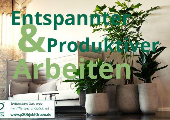 Die besten 25+ Büropflanzen Ideen auf Pinterest Beste pflanzen - indoor garten wohlfuhloase wohnung begrunen