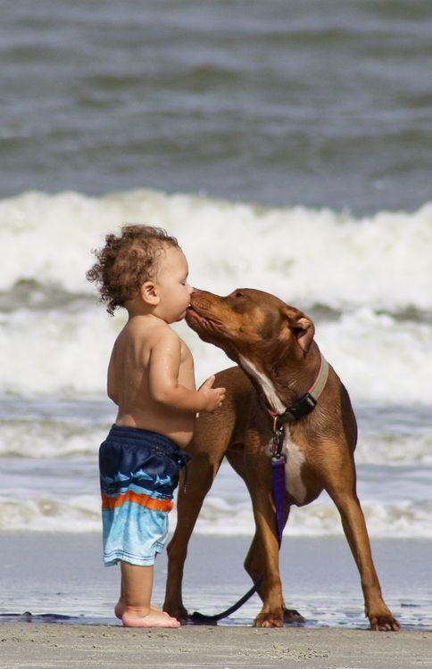 fun on the beach.. so cute! @KaufmannsPuppy