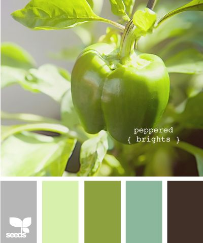 peppered brights: Colors Pallets, Colors Combos, Design Seeds, Colors Palat, Bedrooms Colors, Belle Peppers, Colors Palettes, Colors Schemes, Peppers Bright