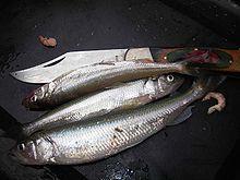 """#Stint – Wikipedia """"The #smelt or #European_smelt ( #Osmerus_eperlanus ) is a species of fish in the Osmeridae family.""""  see: Schweinswale in der Elbe ... http://www.mopo.de/nachrichten/in-der-elbe-leben-sie-gefaehrlich-das-drama-um-die-schweinswale,5067140,22870696.html"""