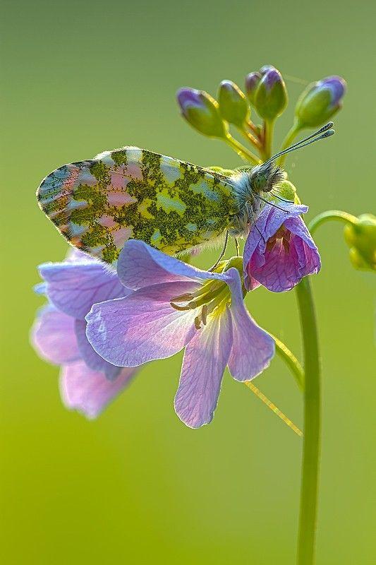 ovaj leptir se fakat uklopio