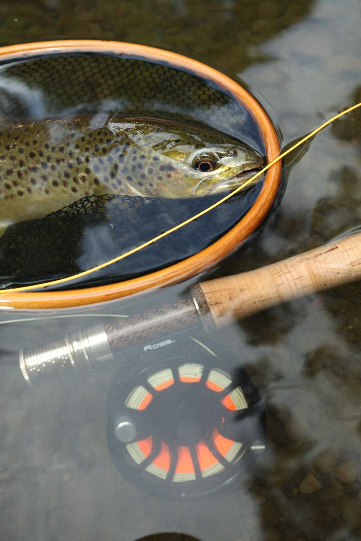 Another lovely Otways brown.