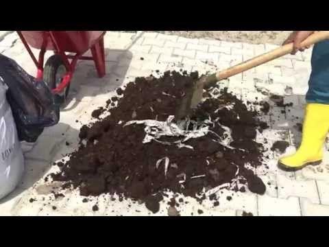 Solucan Yemi (Mama) Hazırlama - YouTube