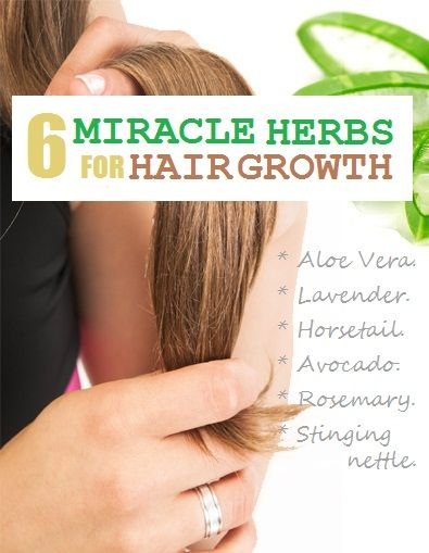Horsetail: Horsetail is rich in an ingredient known as silica which is a perfect ingredient for the strengthening of hair effectively. Horsetail is