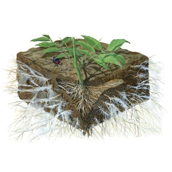 208 best images about organic nutri rich soil on - Nature s care organic garden soil ...