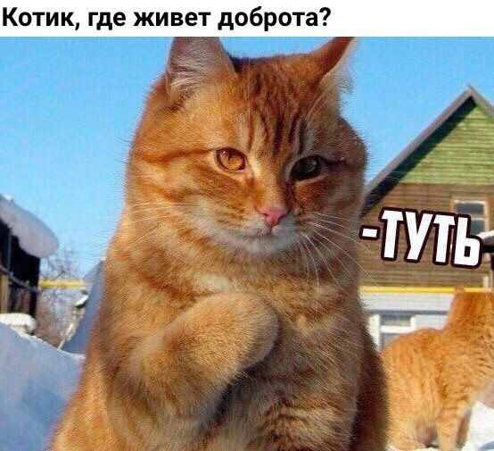 Интеллектуальный юмор | ВКонтакте