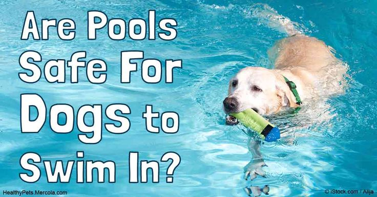 Swimming Is Great Exercise For Dogs However Chlorinated Water May Carry Certain Risks Find