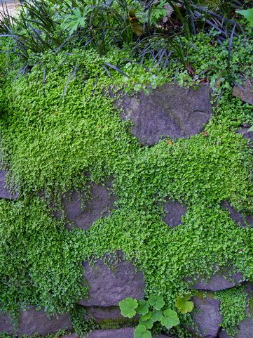 best 25 rock wall ideas on pinterest - Rock Wall Garden Designs