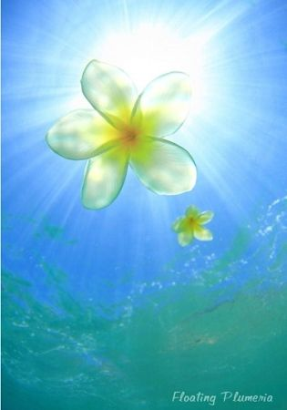 "Hetrick Photography   ""Floating Plumeria"""