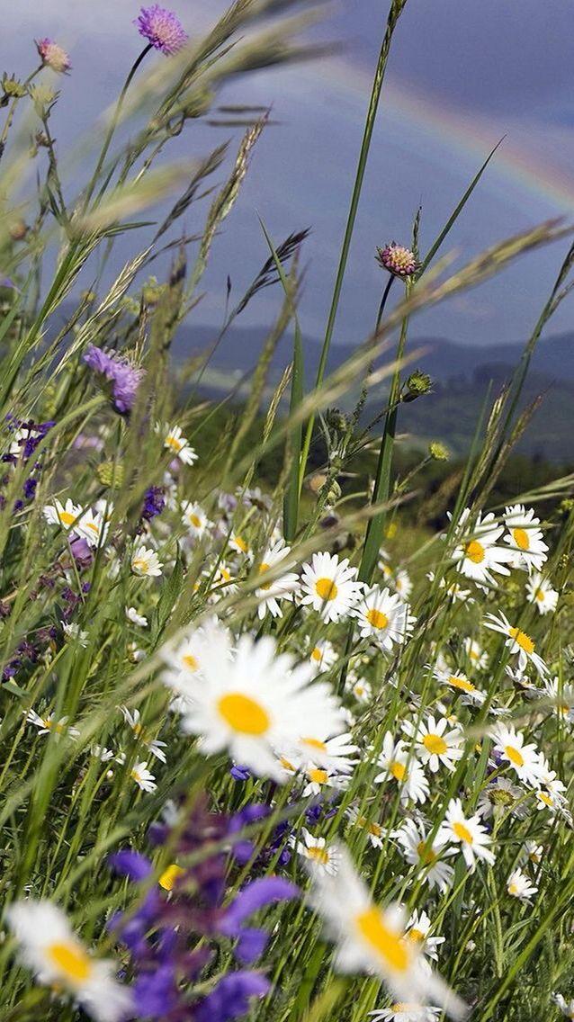 Цветы flowers