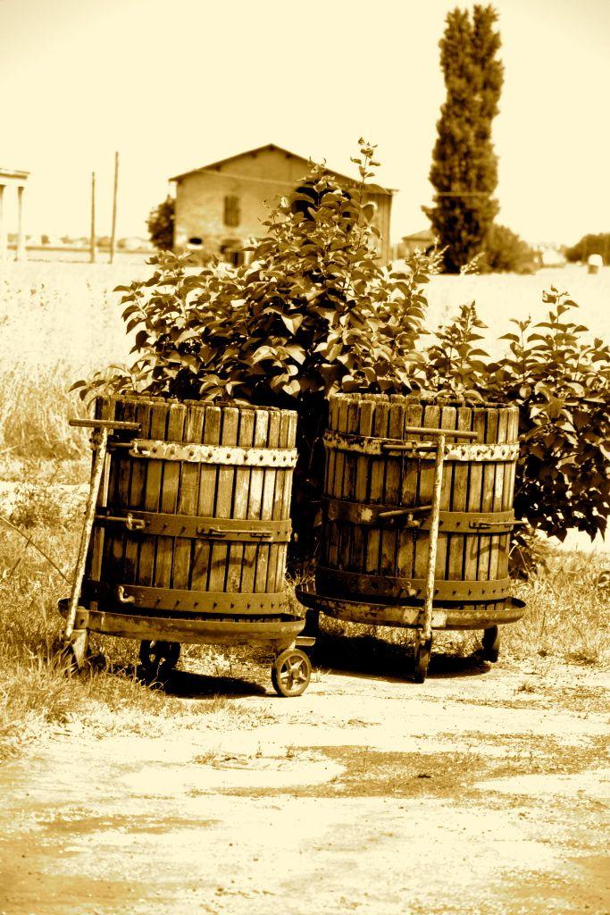 ancient instruments # italian wine # B Cà Bianca dell'Abbadessa